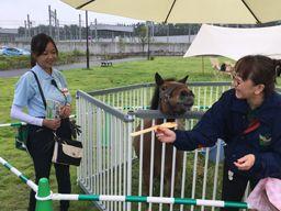 乗馬クラブクレイン 仙台・海岸公園馬術場