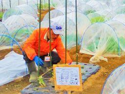 株式会社 アグリメディア ■サポート付き市民農園「シェア畑」の管理・運営