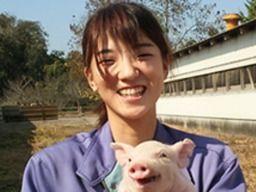 豊橋飼料 株式会社  種豚センター