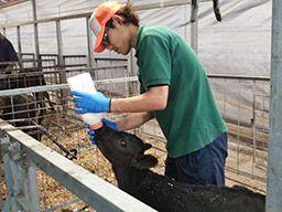 農業生産法人 有限会社若林牧場/【搾乳やエサやりなどの牧場スタッフ】未経験歓迎◆経験者優遇◆女性活躍中